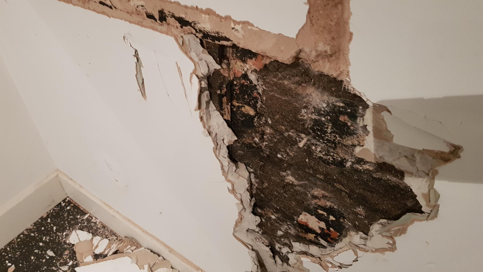 Damp Proofing A Wall With Damp Proof Paint